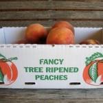 Fancy Tree Ripened Peaches