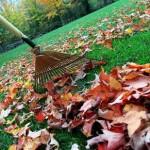 Green Tip: Rake Those Leaves