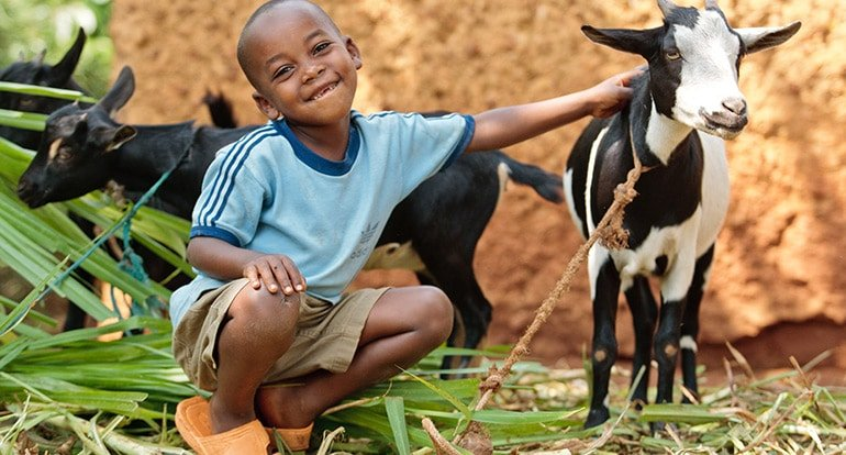 heifer project The latest tweets from heifer media (@heifermedia) source for news, information, and media relations for heifer international, a global nonprofit seeking to end hunger and poverty and care.