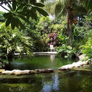Everything You Need To Know About  Swimming Ponds