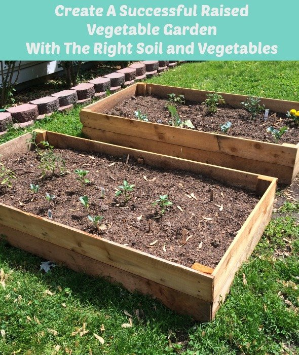 create a successful raised vegetable garden with the right soil and