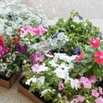 Brighten Up with Colorful Flower Planters