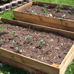 Create A Successful Raised Vegetable Garden With The Right Soil and Vegetables