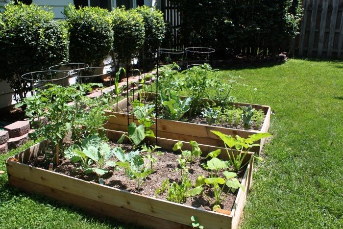 Raised Vegetable Beds