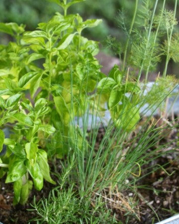 Creating your very own Kitchen Herb Garden with little effort!