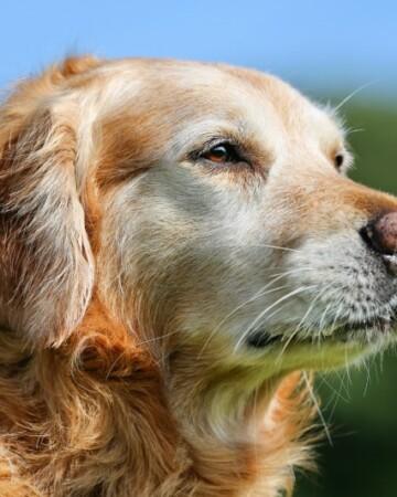5 Reasons To Adopt A Senior Pet