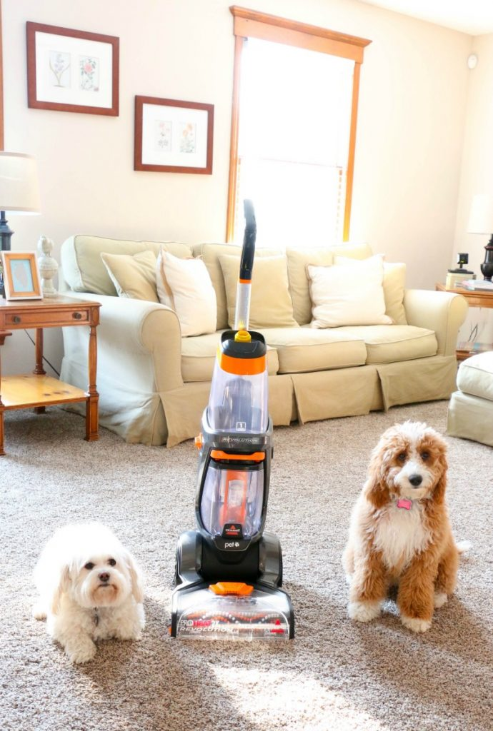 If you have pets and have carpets, you may wonder how in world you can keep them clean and keep your sanity. Well, here is the secret you have to try!