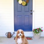Getting Your Pets Clean - Safely