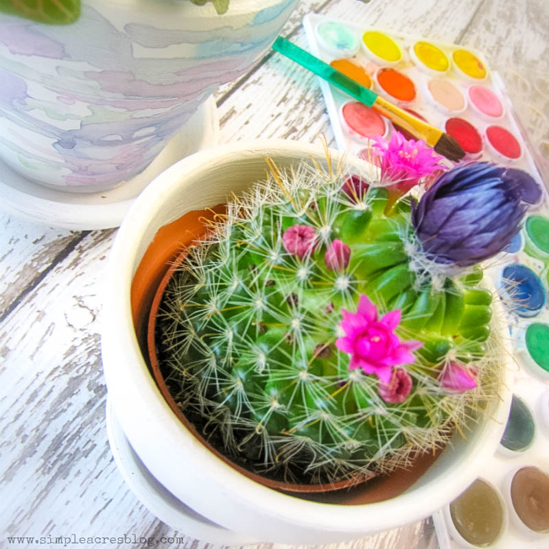 DIY Teacher Appreciation Gift using watercolor paints and succulents that is a perfect craft for kids and adults alike!