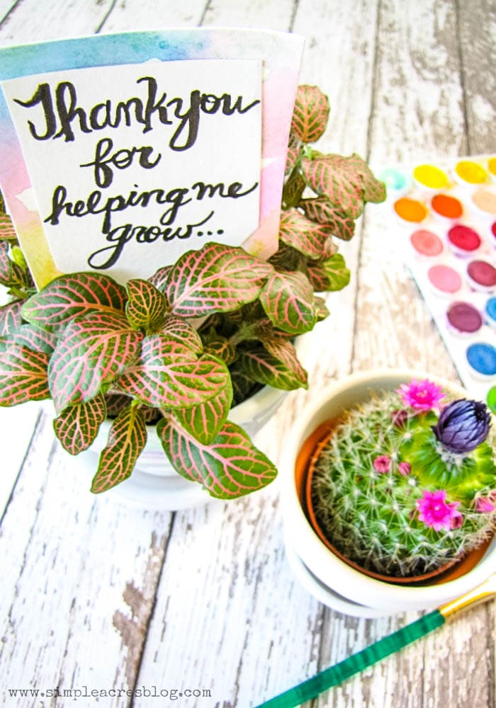 DIY Teacher Appreciation Gift using watercolor paints and succulents!