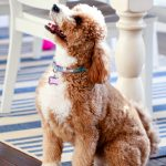 10 Fun Activites To Do With Your Dog