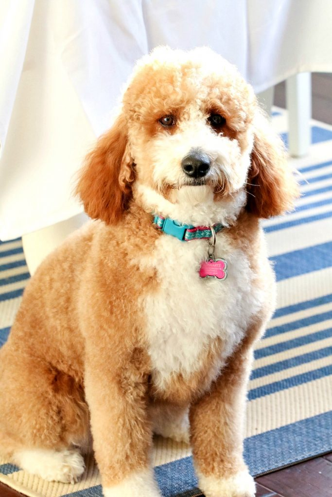 How To Eliminate Pet Odors Naturally