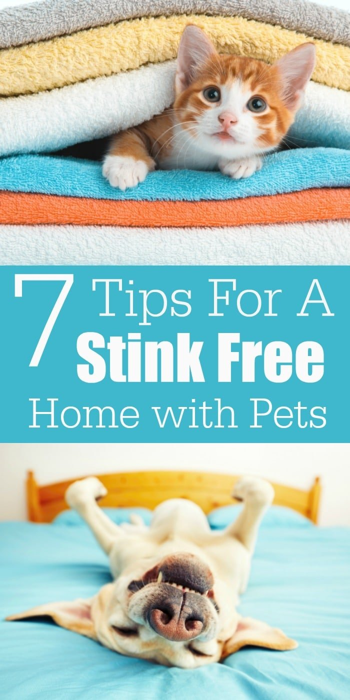 From litter boxes to pet beds, they can all get stinky. But, with a few of my favorite tips, you can make sure you have the best smelling house around!