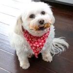 Spoil Your Pup With NEW Milk-Bone Wonder Bones and Milk-Bone GnawBones