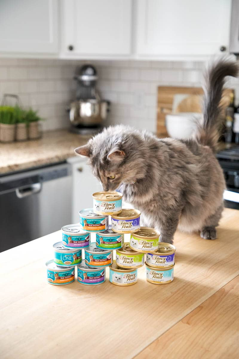 The Healthiest Way To Pamper Your Cat Every Day