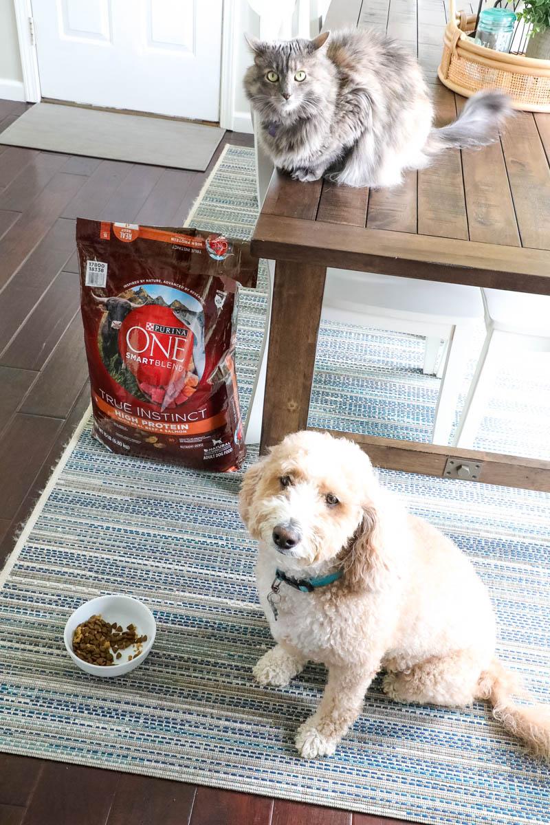 Purina ONE Challenge – Indoor Cat Advantage Cat Food